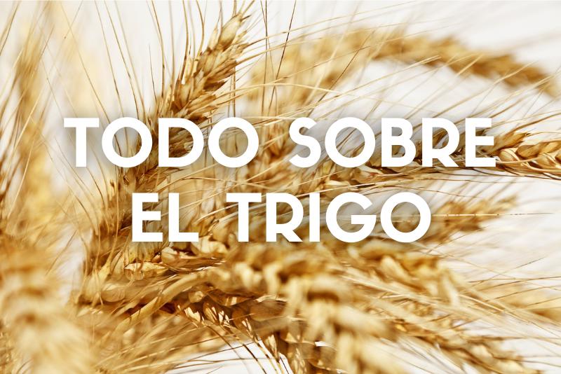Todo sobre el trigo_Cover_Web